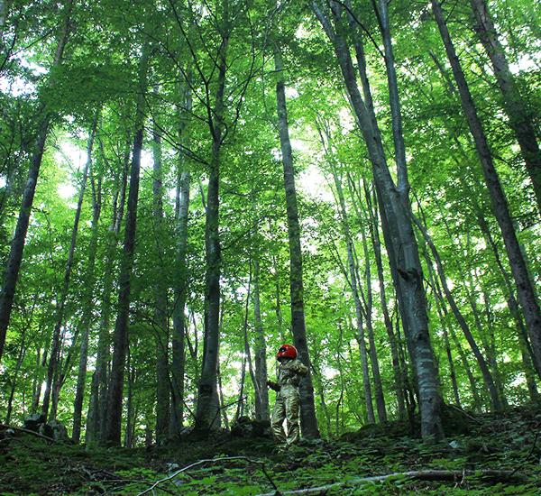 WALTER i boschi a nord del futuro -Fratelli Dalla Via