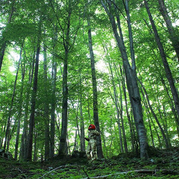 WALTER - I boschi a nord del futuro